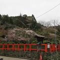写真: 15.04.07.大田神社・大田ノ沢のカキツバタ群落(北区)