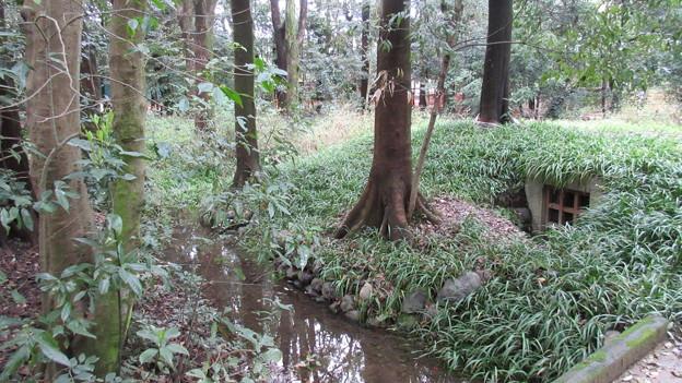 糺の森(左京区。下鴨神社)