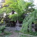 Photos: 高遠城(長野県伊那市営 高遠城址公園)