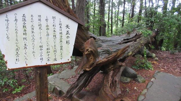 長篠設楽原合戦場(新城市)鳶ヶ巣山砦