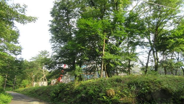 仙石原西方(箱根町)