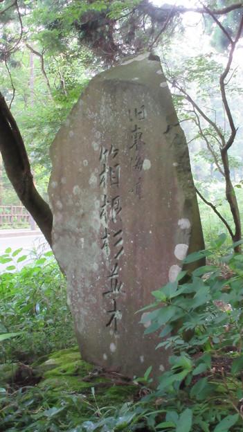 箱根旧街道杉並木(箱根町)