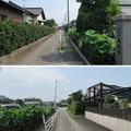 成福寺/北条氏邸跡(伊豆の国市)旧下田街道?