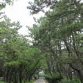 Photos: 千本松(沼津市営 千本浜公園)
