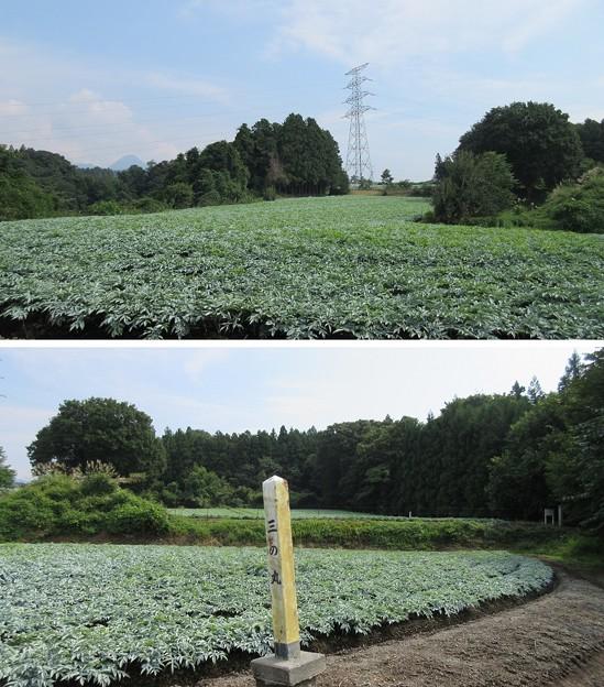 長井坂城(渋川市・昭和村)三の丸北