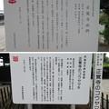 Photos: 正覚寺(沼田市)山門・コウヤマキ