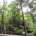 Photos: 柳沢城(岩鼓の出城)/観音山(滝峩山。東吾妻町)