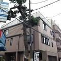 Photos: 大宮八幡宮参道(杉並区)鞍掛けの松