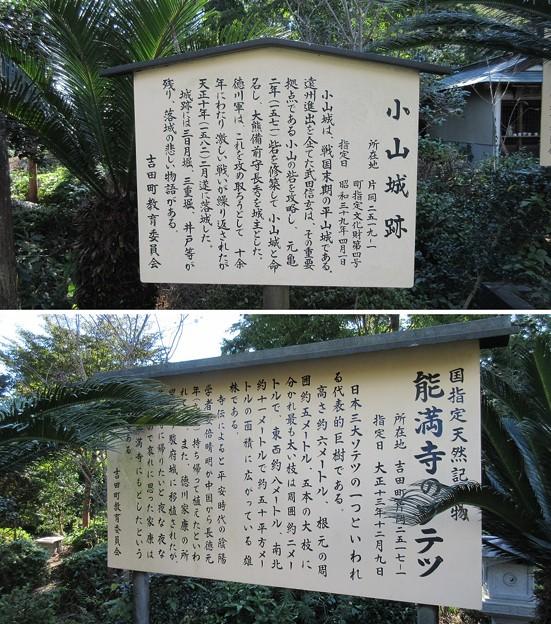小山城/能満寺(吉田町)ソテツ