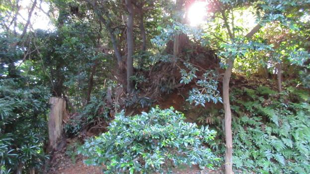 小山城(吉田町立 能満寺山公園)二の丸南東角