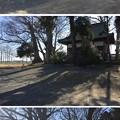 "Photos: 天神島城(一色氏館。幸手市)微高地。天神""島""だったという…"