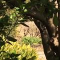 Photos: 天神島城(一色氏館。幸手市)民家敷地内に土塁?