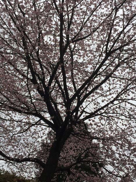 17.03.06.護国寺(大塚5丁目)