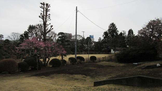 二十三夜尊 桂岸寺(水戸市)保和苑