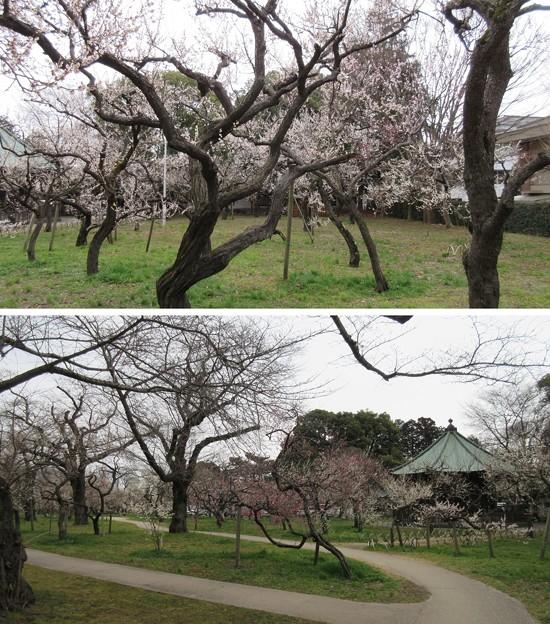 弘道館(旧弘道館。水戸市)弘道館公園