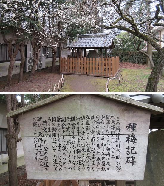 弘道館(旧弘道館。水戸市)種梅記碑