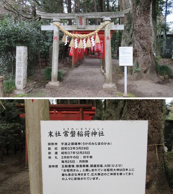 常盤神社(水戸市)稲荷社