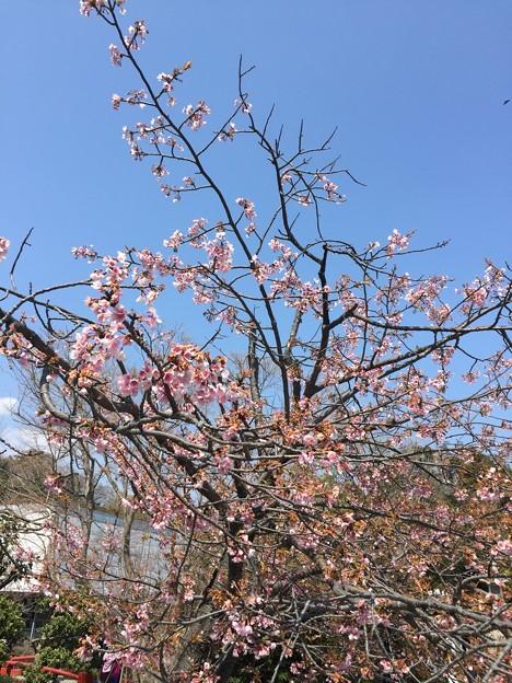 17.03.28.鶴岡八幡宮(鎌倉市)