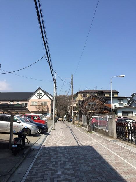 旧参道(鎌倉市)