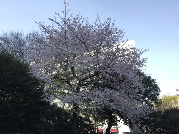 17.04.06.広尾駅近く(南麻布4丁目)