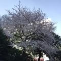 Photos: 17.04.06.広尾駅近く(南麻布4丁目)