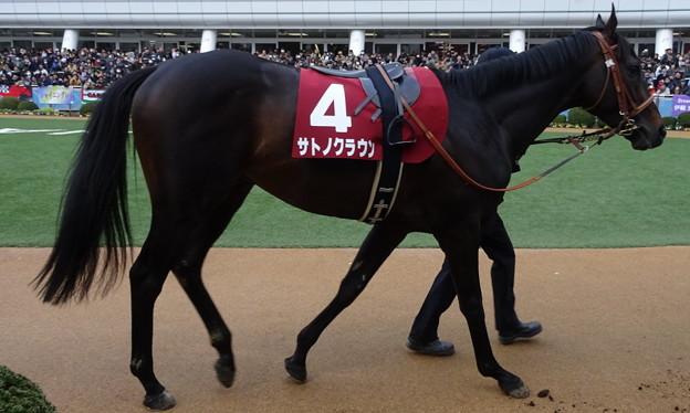 サトノクラウン(2回中山4日 11R 第52回 報知杯弥生賞(GII)出走馬)