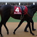 Photos: サトノクラウン(2回中山4日 11R 第52回 報知杯弥生賞(GII)出走馬)