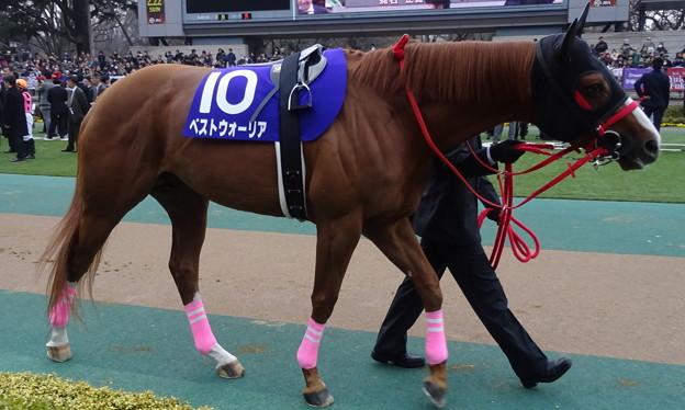 ベストウォーリア(1回東京8日 11R 第32回 フェブラリーステークス(GI)出走馬)