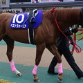 Photos: ベストウォーリア(1回東京8日 11R 第32回 フェブラリーステークス(GI)出走馬)