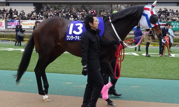 ワンダーアキュート(1回東京8日 11R 第32回 フェブラリーステークス(GI)出走馬)