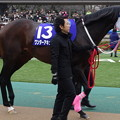 Photos: ワンダーアキュート(1回東京8日 11R 第32回 フェブラリーステークス(GI)出走馬)