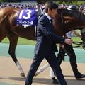 ストレイトガール(2回東京8日 11R 第11回 ヴィクトリアマイル(GI)出走馬)