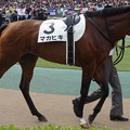 マカヒキ(2回東京12日 10R 第83回 東京優駿 日本ダービー(GI)出走馬)