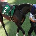 Photos: アルフレード(2回福島4日 11R 第51回 七夕賞(GIII)出走馬)