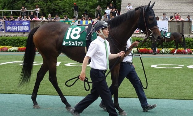 Photos: ルージュバック(3回東京4日 11R 第33回 エプソムカップ(GIII)出走馬)