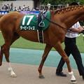 Photos: ダービーフィズ(3回東京4日 11R 第33回 エプソムカップ(GIII)出走馬)