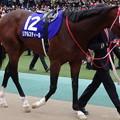 Photos: リアルスティール(4回東京9日 11R 第154回 天皇賞(秋)(GI)出走馬)