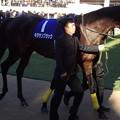 Photos: キタサンブラック(5回中山9日 10R 第61回グランプリ 有馬記念(GI)出走馬)