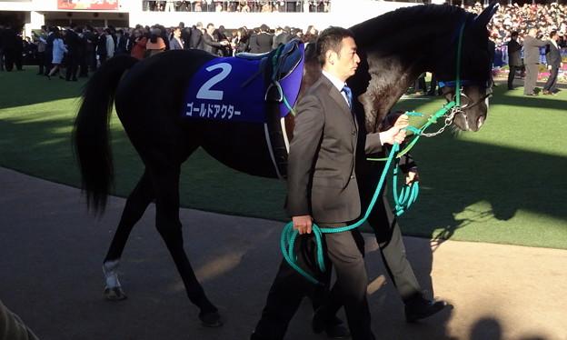 Photos: ゴールドアクター(5回中山9日 10R 第61回グランプリ 有馬記念(GI)出走馬)