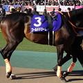 写真: ゴールドドリーム(1回東京8日 11R 第34回 フェブラリーステークス(GI)出走馬)