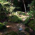 Photos: 夏の木陰
