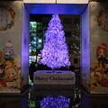 Photos: ご注文はうさぎですか?? Merry Christmas