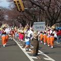 Photos: 相模原桜祭り 阿波おどり \(^o^)/