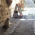 ガレット屋さんの看板猫