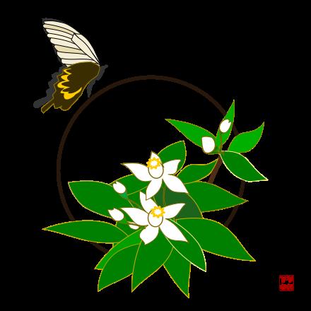 スダチの花