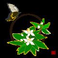 写真: 蜜柑の花