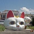 写真: 常滑の招き猫