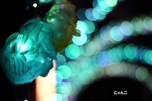 写真: ~青い薔薇を~