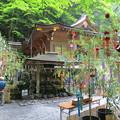 貴船神社の七夕さん(2014年6月)