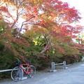 鍬山神社の紅葉(2015年10月)